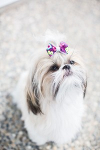 Nala Puppy